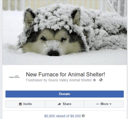 animal shelter_1541800743523.PNG.jpg