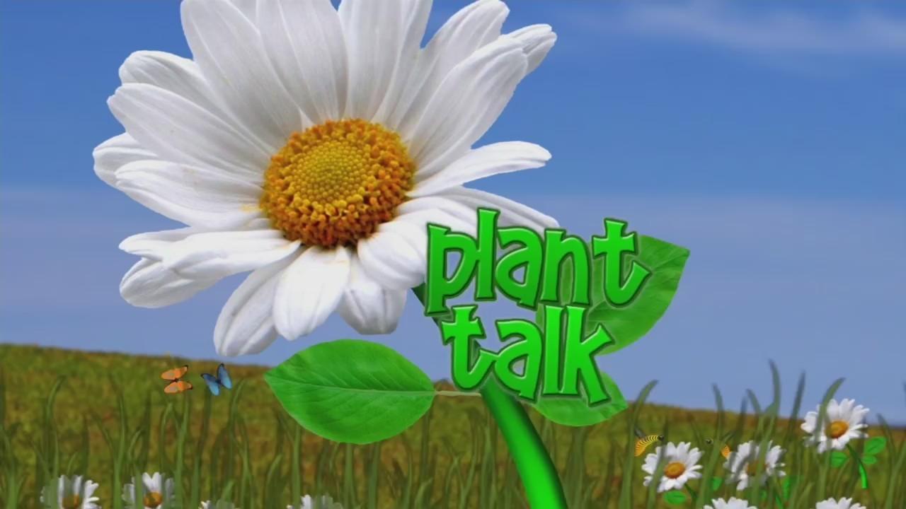 Plant Talk