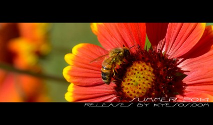 Bee close up by Kyesos