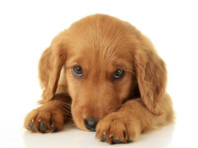 cute dog using essential oils
