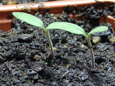 self-sustainable gardening habits start with planting the seeds