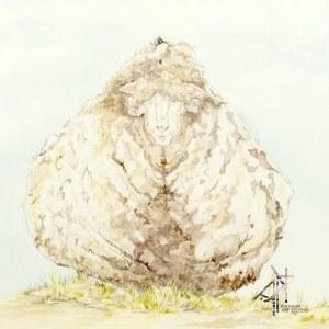 Chris the Sheep © Kylie Fogarty