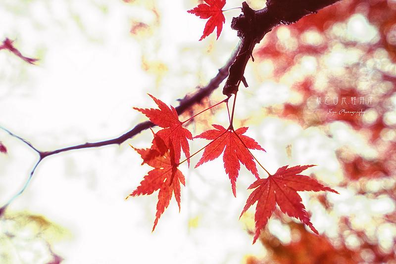【日本自助旅行】秋之日光、輕井澤DAY2-2之秋雨騎行雲場池┃賞楓、銀杏