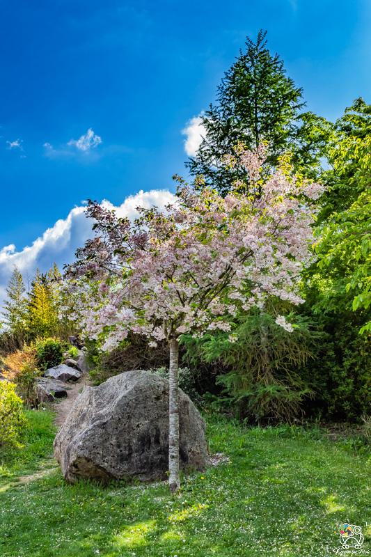 jardinjaponais - kyonyxphoto-serie-dijon-jardin-japonais-3.jpg