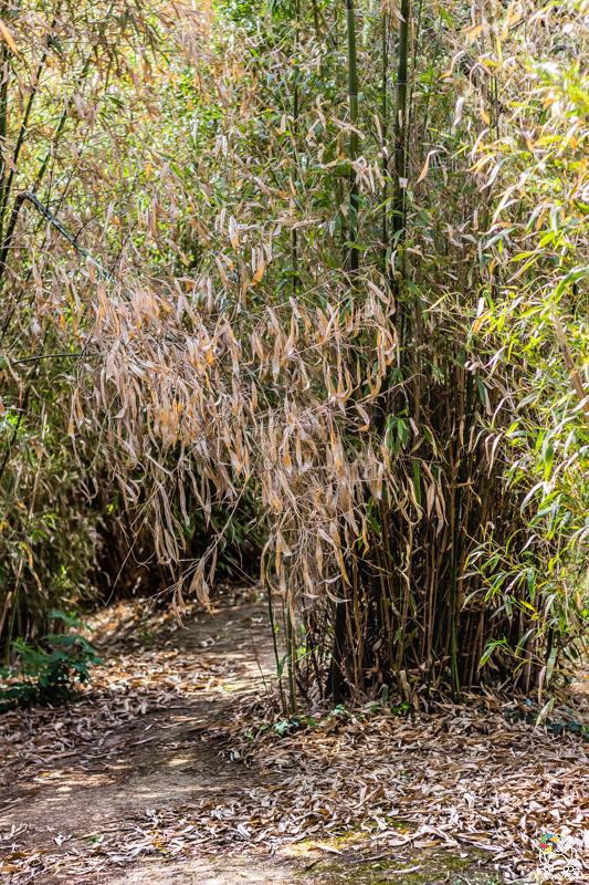 jardinjaponais - kyonyxphoto-serie-dijon-jardin-japonais-4.jpg