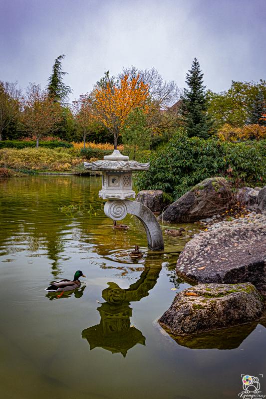 jardinjaponais - kyonyxphoto-series-dijon-jardin-japonais-15