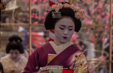 A grand outdoor tea ceremony (野点大茶湯) at the Kitano Tenman-gū Shrine (北野天満宮) In Kyoto, performed by the geiko and maiko. You will be served whipped green matcha tea and a sweet by these beautiful ladies.