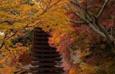 Autumn Hotspots in Kyoto and Nara!