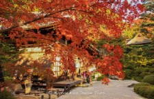 Temple of Golden Bliss: Konpuku-ji (金福寺) during the autumn season of 2011 in Kyoto!