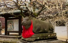 "The ""sacred cow"" of the Kitano Tenman-gū (北野天満宮) in Kyoto."