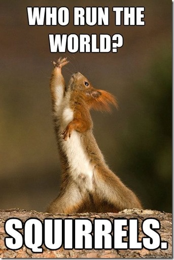 Squirrels run the world
