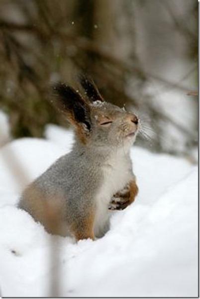forgiveness squirrel