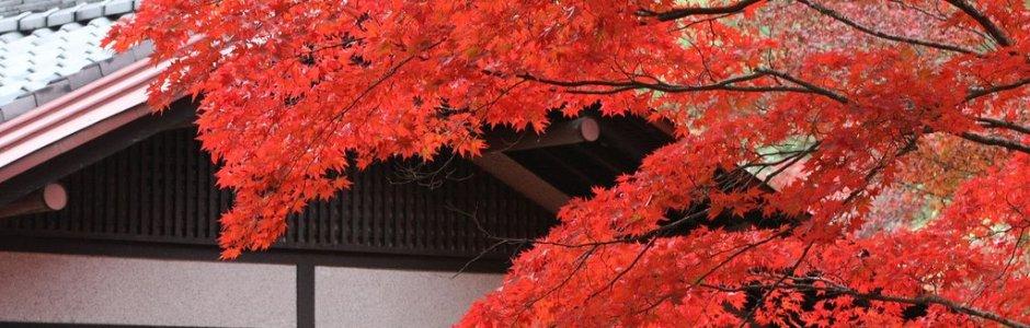 Autumn Leaves on Miyajima Island 2019
