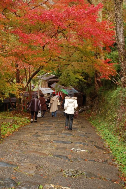 Colorful_Autumn_Foliage_in_Kyoto