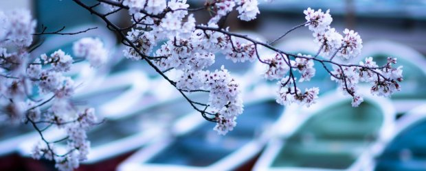 10 Best Places to see Cherry Blossom in Tokyo