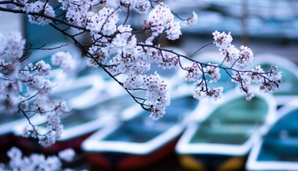 0d8726141420 10 Best Places to see Cherry Blossom in Japan | Kyuhoshi