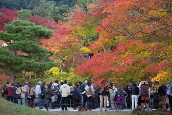 Kodaiji_Temple_Autumn_Leaves_Kyoto