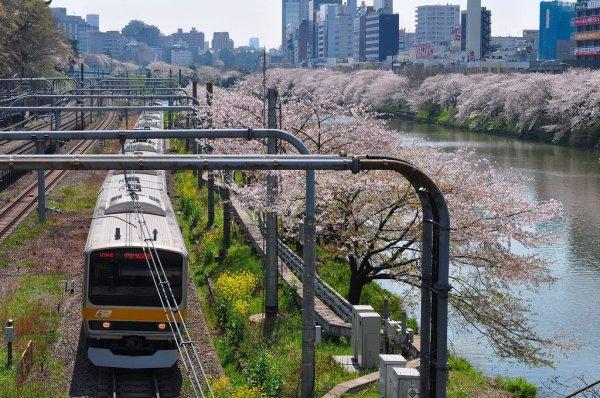 Sakura_and_Train_Chuo_Line _Iidabashi_Tokyo