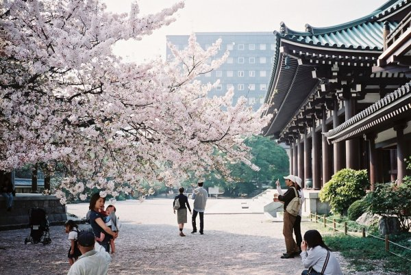 hanami_in_fukuoka_japan
