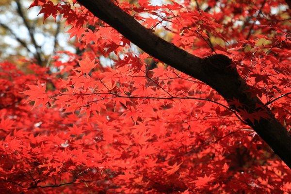 autumn_colors_kitano_tenmengu