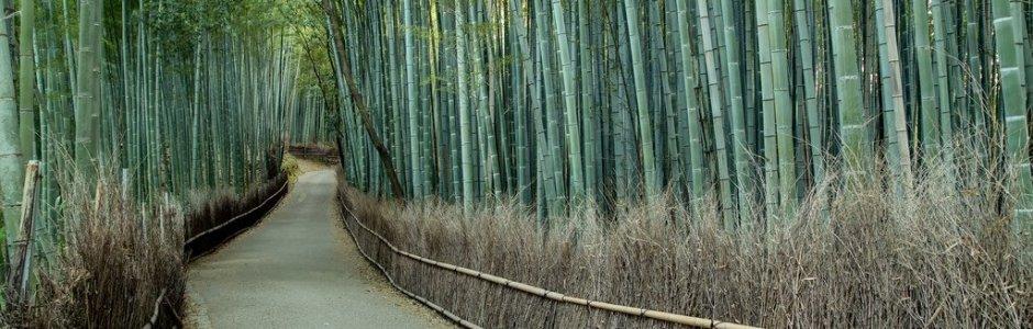 Japan Travel Info