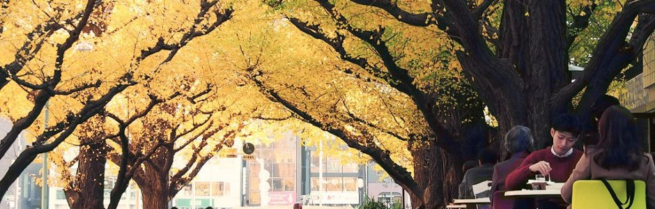 10 Best Places to See Autumn Leaves in Tokyo