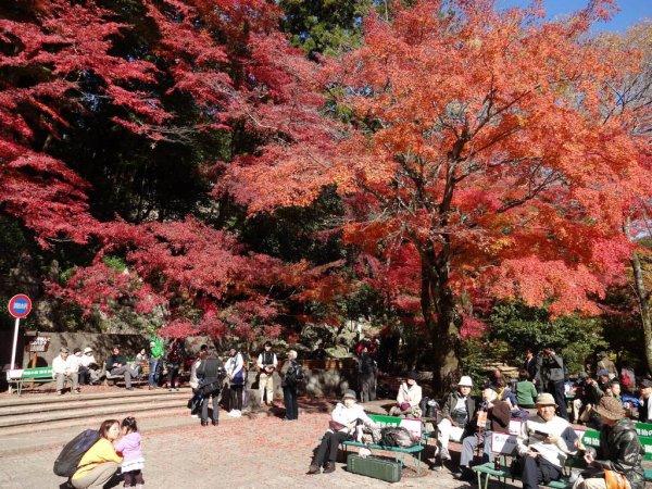 mount_takao_fall_colors