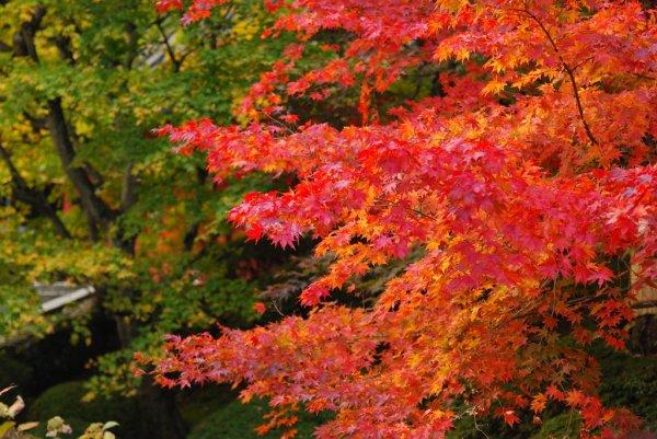 autumn_leaves_in_nikko_japan