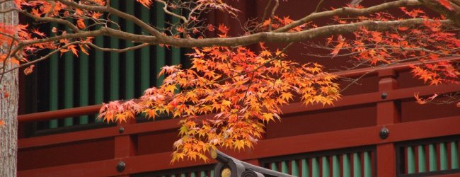 Autumn Leaves in Nikko | Visit Tochigi