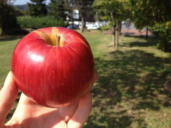 aomori_apple