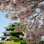 matsumoto_castle_sakura_japan