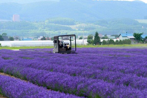 lavender_east_farm_tomita_furano