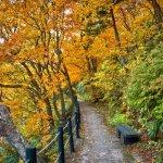 autumn_leaves_hachimantai