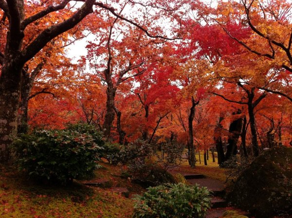 hakone_fall_foliage