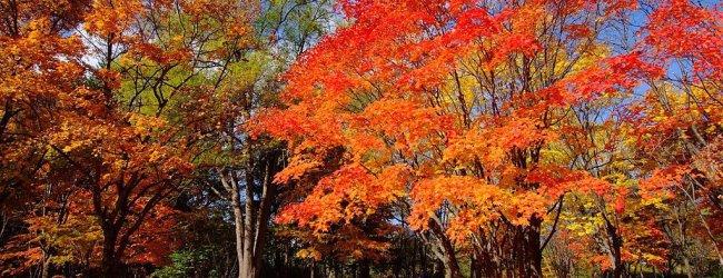 Hokkaido Autumn Itinerary | Travel Plan 2018