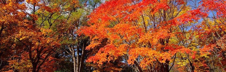 Hokkaido Autumn Itinerary | Travel Plan 2019
