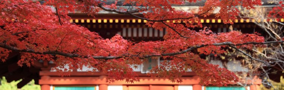 Autumn Leaves in Nara | Travel Guide 2020