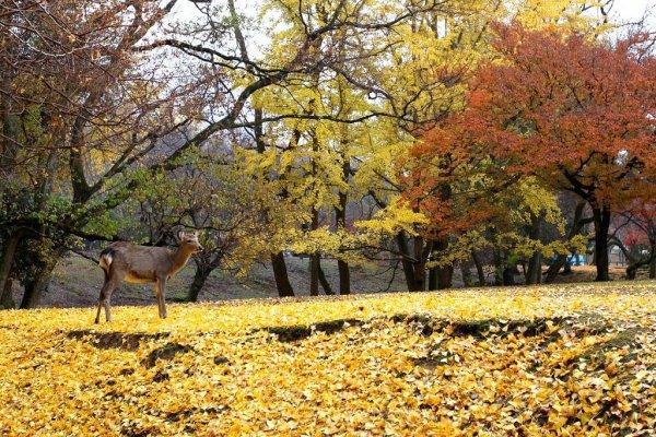 nara_park_autumn_foliage