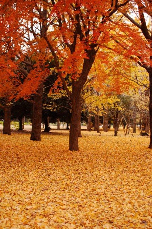 autumn_leaves_tokyo