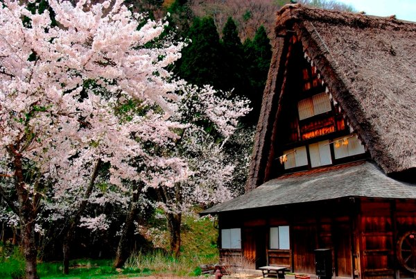 shirakawago_in_spring