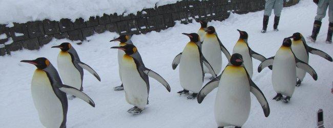 Hokkaido Winter Itinerary | Travel Plan 2017