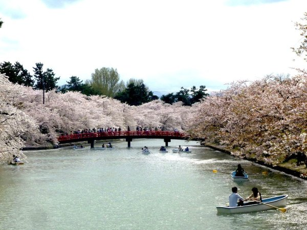 hirosaki_park_cherry_blossom_aomori