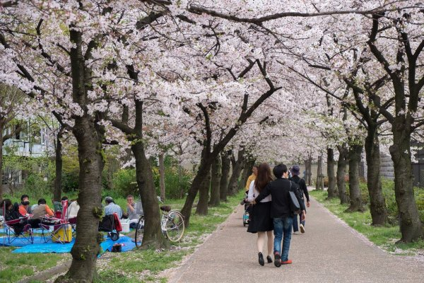 osaka_castle_park_cherry_blossoms