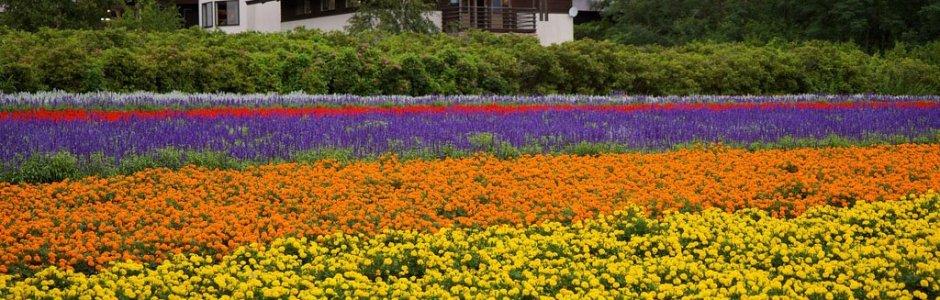 Farm Tomita, Lavender East, Hokkaido, Japan