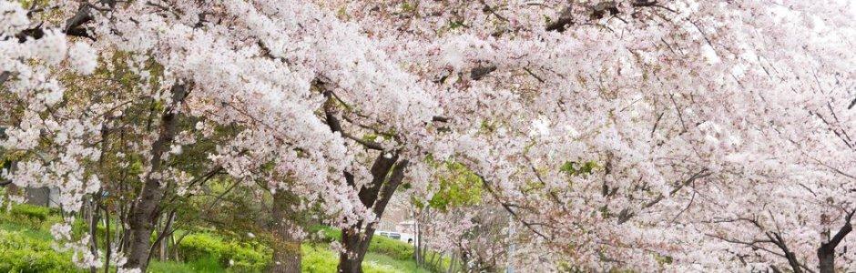 2-Day Osaka Spring Itinerary