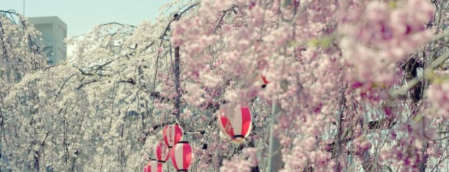 6 Best Places to See Cherry Blossom in Sendai
