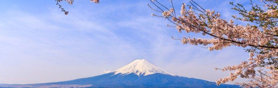 Cherry Blossom in the Fuji Five Lakes Area