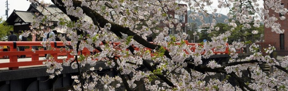 7 Days in Central Japan Spring Itinerary