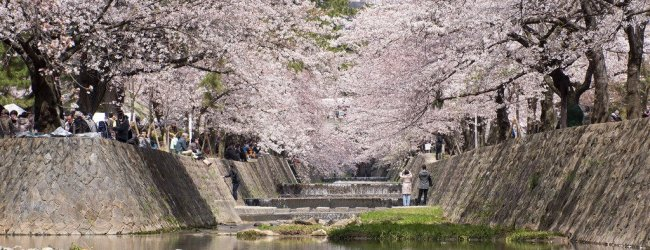 5 Best Places to See Cherry Blossom in Hyogo