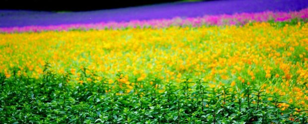 10 Best Things to Do in Furano in Summer